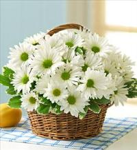 White Daisy Basket by America