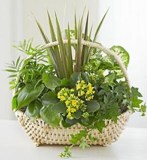 European Sympathy Dish Garden™ by America's Funeral Florist