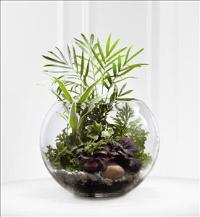 The FTD® Woodland Greens™ Terrarium by America
