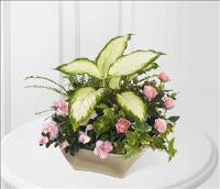 The FTD Garden of Grace™ Planter by America