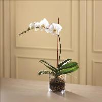 White Orchid Planter by America