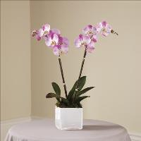 Pink Orchid Planter by America