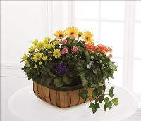 Gentle Blossoms Basket by America