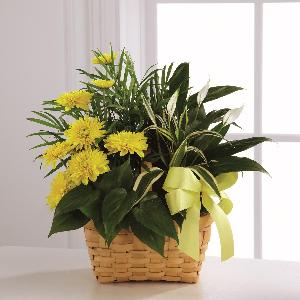 Loving Light Dishgarden by America's Funeral Florist