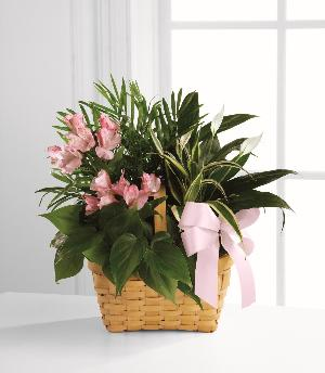 Living Spirit Dishgarden by America's Funeral Florist