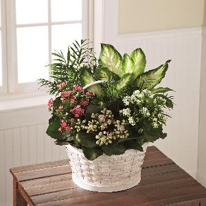 Rural Beauty Dishgarden by America's Funeral Florist