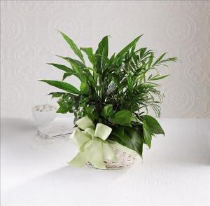 Woodland Greens™ Basket by America's Funeral Florist