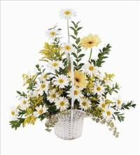 Daisies & Yellow Gerberas by America