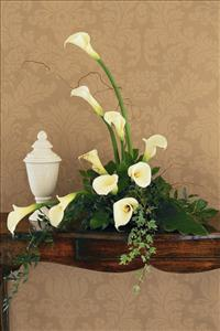 White Calla Design by America