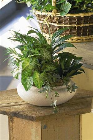 Green Garden Bowl by America's Funeral Florist