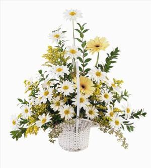 Daisies & Yellow Gerberas by America's Funeral Florist